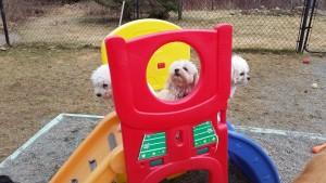 Heide's Pet Care Playground