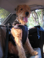 Heide's Pet Care riding in the car