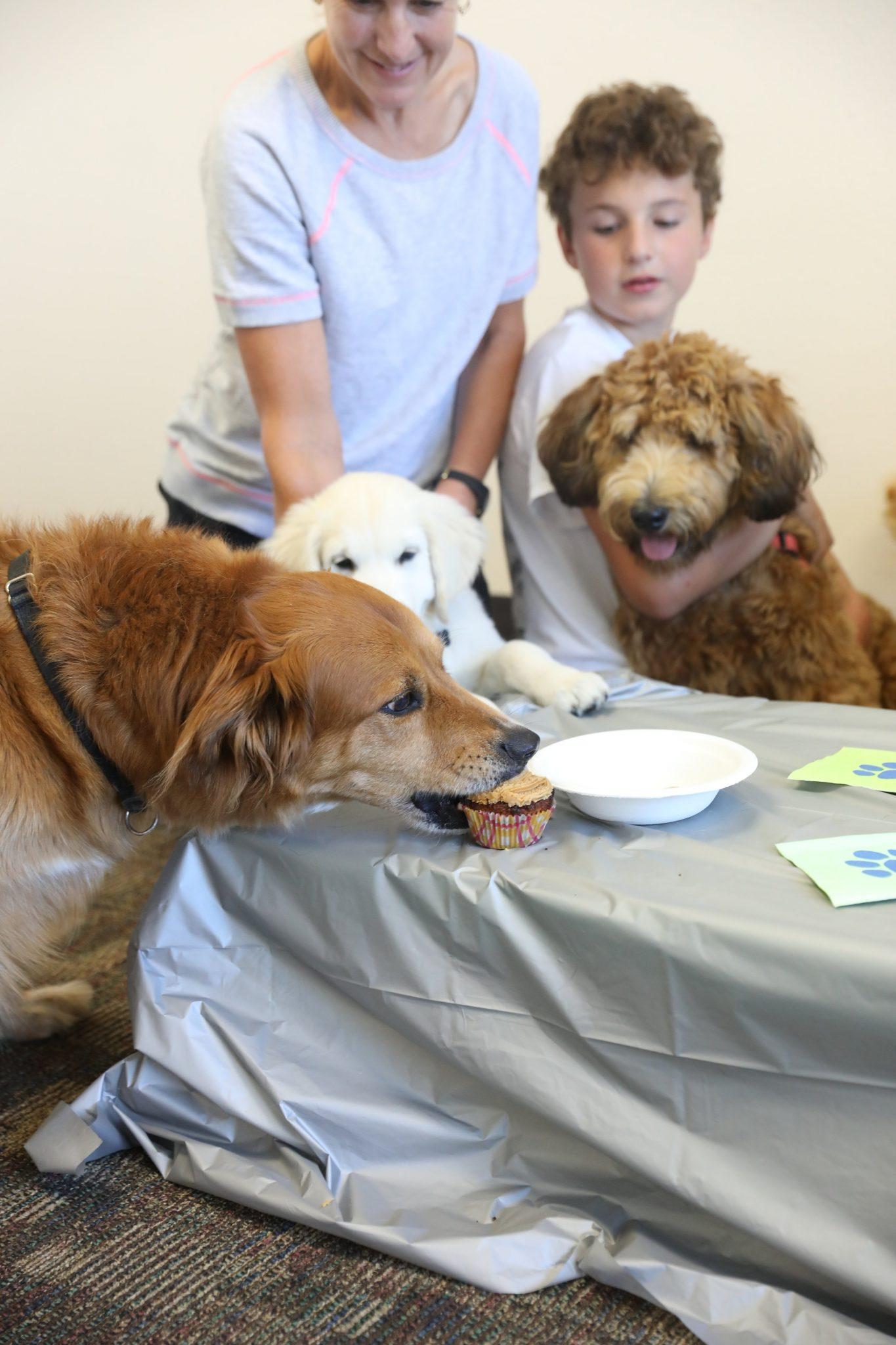 Doggie Parties