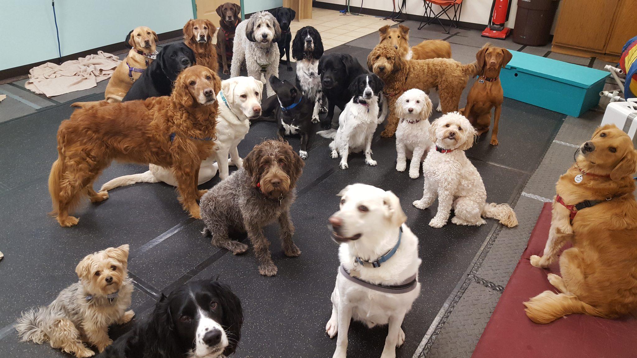 Group Dogs Heide's Pet Care