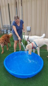 Doggie Pool Fun
