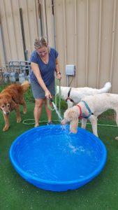 Doggie Pool Fun