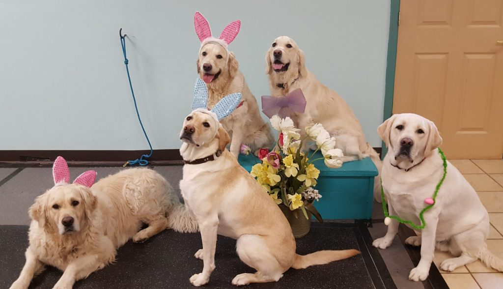 Sit! Dog Training and Fun