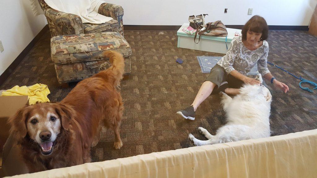 Dog Brushing & Loving