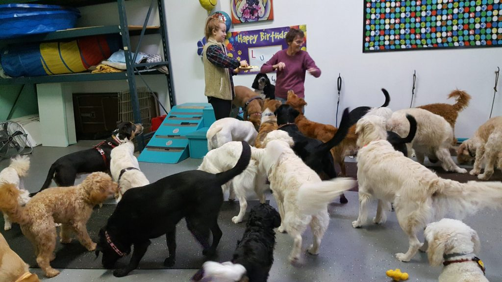 Group Doggie Party