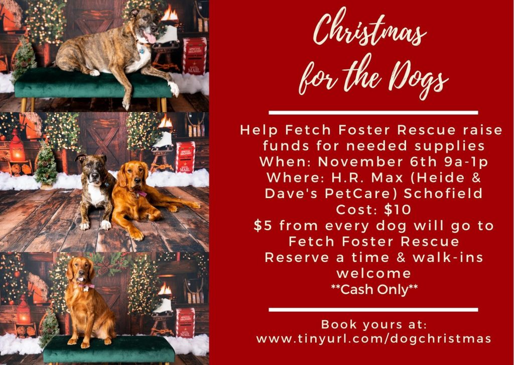 Christmas for the Dogs